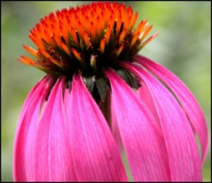 10 Medicinal Herbs to Plant This Spring