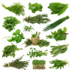 herbs4-300x300