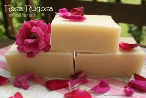 Rosa Rugosa Soap Recipe (Palm Free)