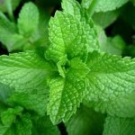 Ways to Use Peppermint for Good Health