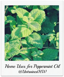 4 Ways to Use Peppermint Oil for Better Health
