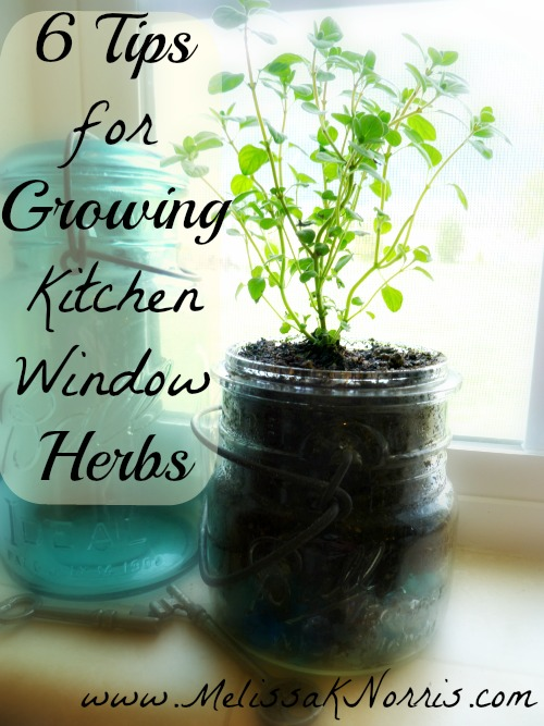 grow kitchen window herbs the amish way herbs and oils hub