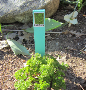 Do It Yourself Herb & Plant Markers