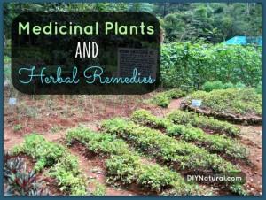 Medicinal Plants & Herbal Remedies for Beginners