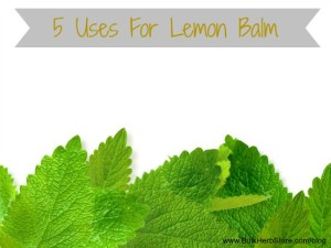 5 Lemon Balm Uses and Recipes