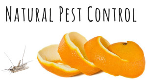 31 Natural Pest Control Methods . . . For Those Little Things That Really BUG You!