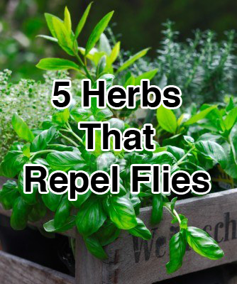 zzzzzzzzz5-Herbs-That-Repel-Flies