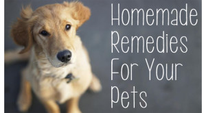 zzzzzzzzzhomemade-remedies-for-pets