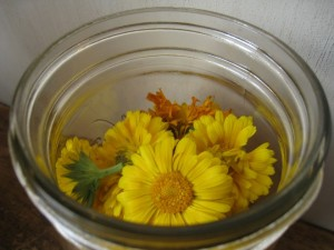 How to Make Homemade Calendula Extract