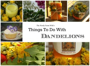 Things to Do With Dandelions – FREE EBook