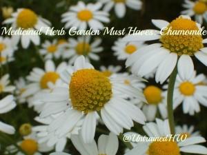 zzzzzzzzzzzzzzMedicinal-Herb-Garden-Must-Haves-Chamomile