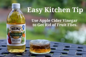 zzzzzzzzzzzzzzhow-to-get-rid-of-fruit-flies1