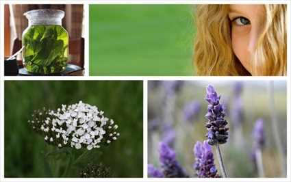 Seven Herbs You Need This Summer!