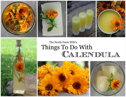 Things To Do With Calendula (FREE eBook)