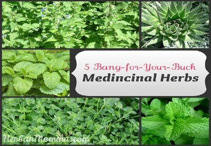 5 Bang for Your Buck Medicinal Herbs