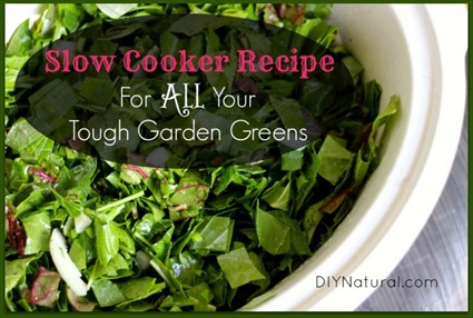 Tasty Recipe For All Your Tough Garden Greens