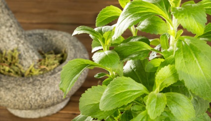How To Grow and Extract Naturally Sweet Stevia