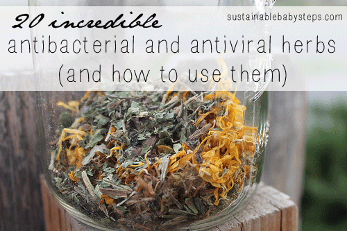 20 Antibacterial and Antiviral Herbs and How to Use Them