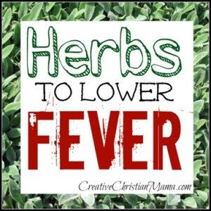 The Best Herbs for Lowering Fever