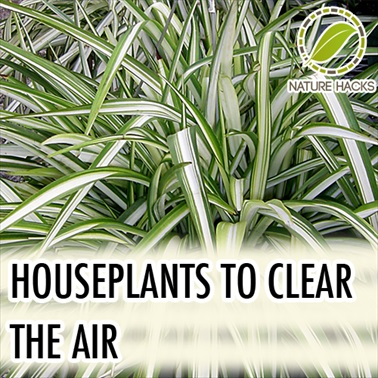 How To Use House Plants to Clear Your Indoor Air