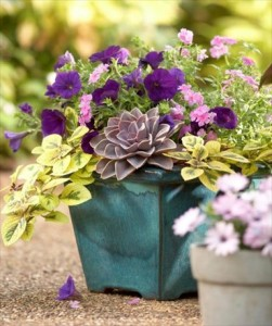 30+ Beautiful Container Gardens