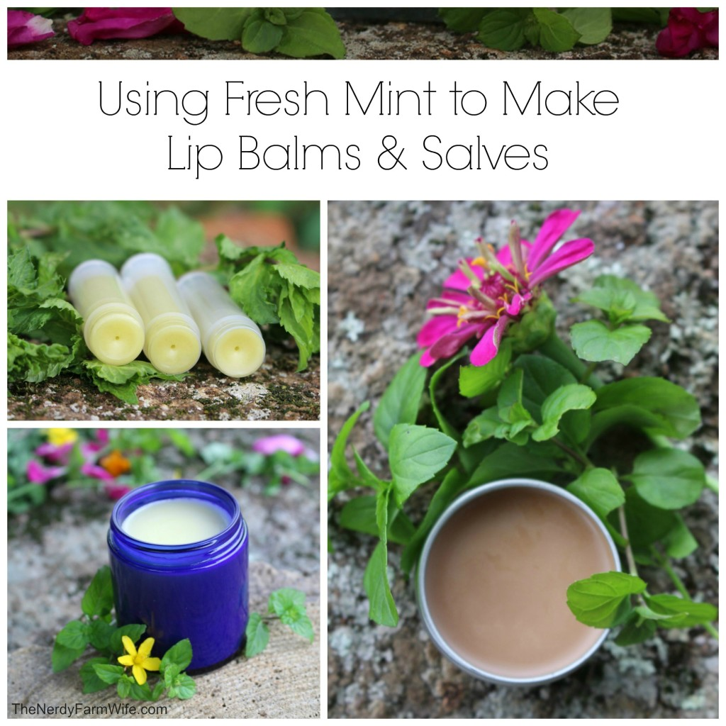 Using Fresh Mint to Make Lip Balms & Salve (3 Recipes)