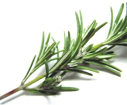 Rosemary Essential Oil Improves Memory