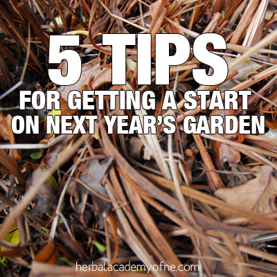 5 Tips for Getting a Start on Next Year's Garden