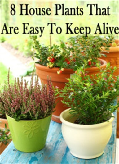 8 house plants that are easy to keep alive herbs and for Easy to keep indoor plants
