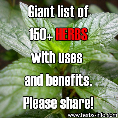 Giant List of 150+ Herbs With Uses and Benefits