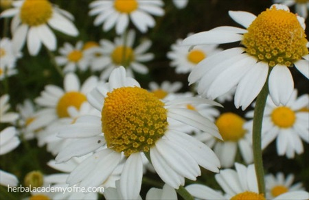 3 Herbs That Help to Reduce Anxiety