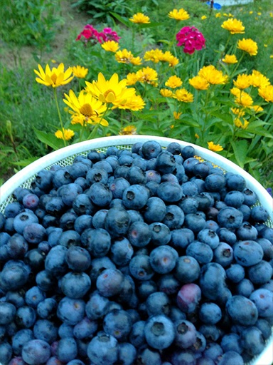 Homemade Blueberry Vinegar Recipe
