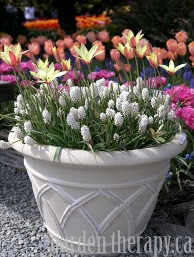 How to Prepare Fall Bulb Planters for Spring