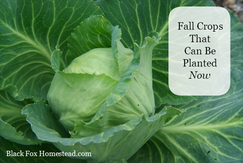 Fall Vegetables That Can Be Planted Now