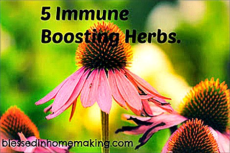 5 Immune Boosting Herbs for the Fall & Winter