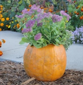 Five Easy Fall Container Ideas
