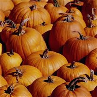 Tips on Harvesting Pumpkins and Saving the Seeds