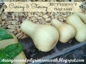 How to Harvest and Store Butternut Squash Throughout the Winter