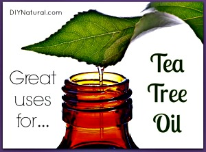 12 Every Day Health Uses for Tea Tree Essential Oil