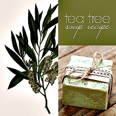 Homemade Tea Tree Soap Recipe