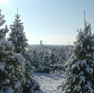 herbal December