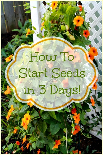 How to Start Garden Seeds in 3 Days