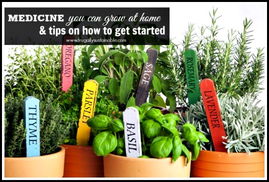 Medicine You Can Grow at Home & Tips on How To Get Started