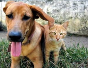 21 Natural Home Remedies for Pets