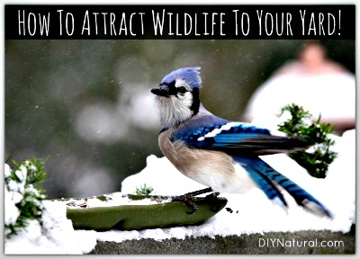 How to Naturally Attract Birds and Wildlife To Your Yard