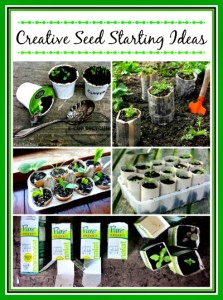 10 Creative Indoor Seed Starting Ideas