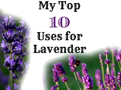 Top 10 Uses for Lavender