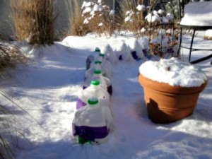 Why Winter Sowing of Perennials Works