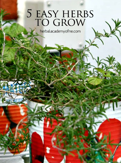 5 Easy Herbs You Can Grow