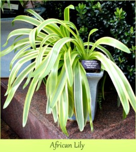 8 Must Have House plants
